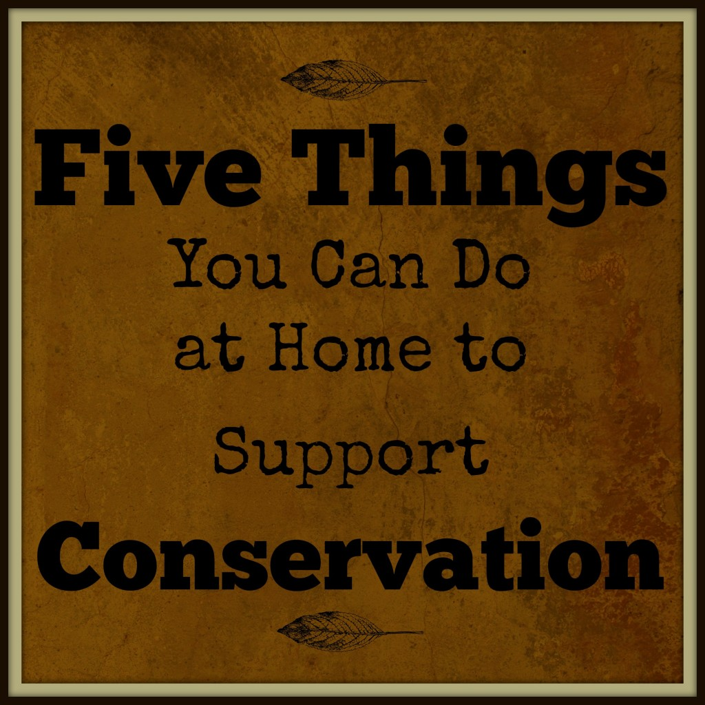 Five things you can do at home to support conservation