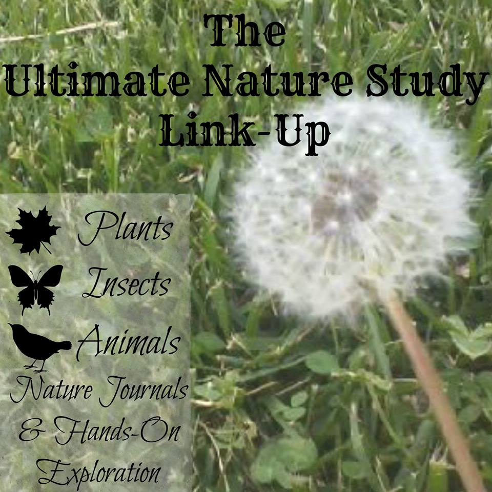 Nature study link up