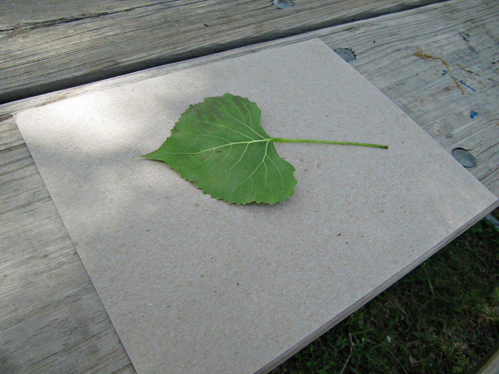 How to Make a Leaf Rubbing