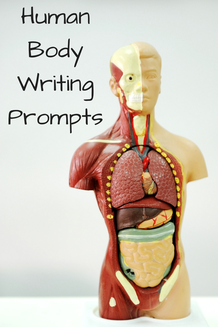 Human Body Writing Prompts Homeschool Antics